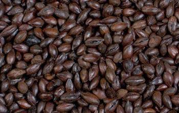 bira-maltıo-chocolate