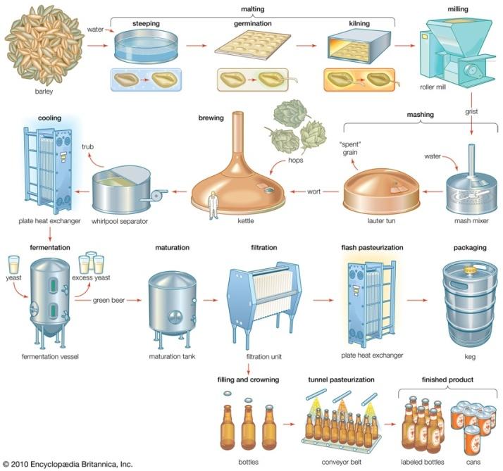brew_process