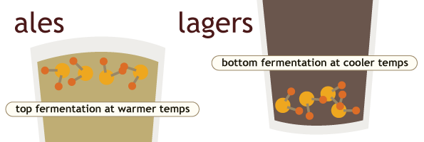 ales-lagers-beers-bottom-fermentation
