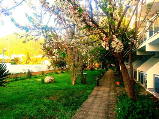garden butik otel kuşadası bahçe